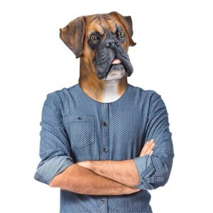 Barry the Boxer Mask