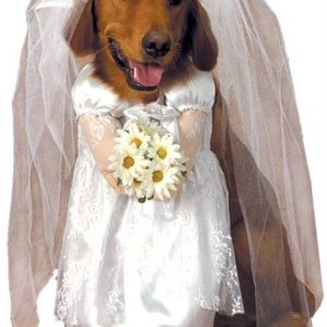 Bride Dog Costume