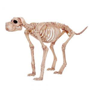 Bruiser Bonez the Skeleton Dog