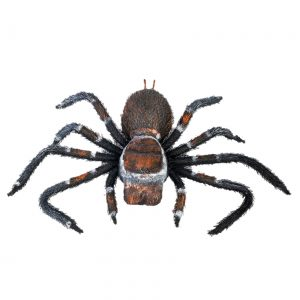 Creepy Crawler Tarantula