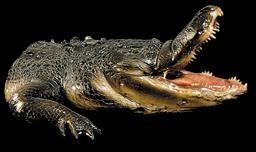 Gator Haunted House Prop